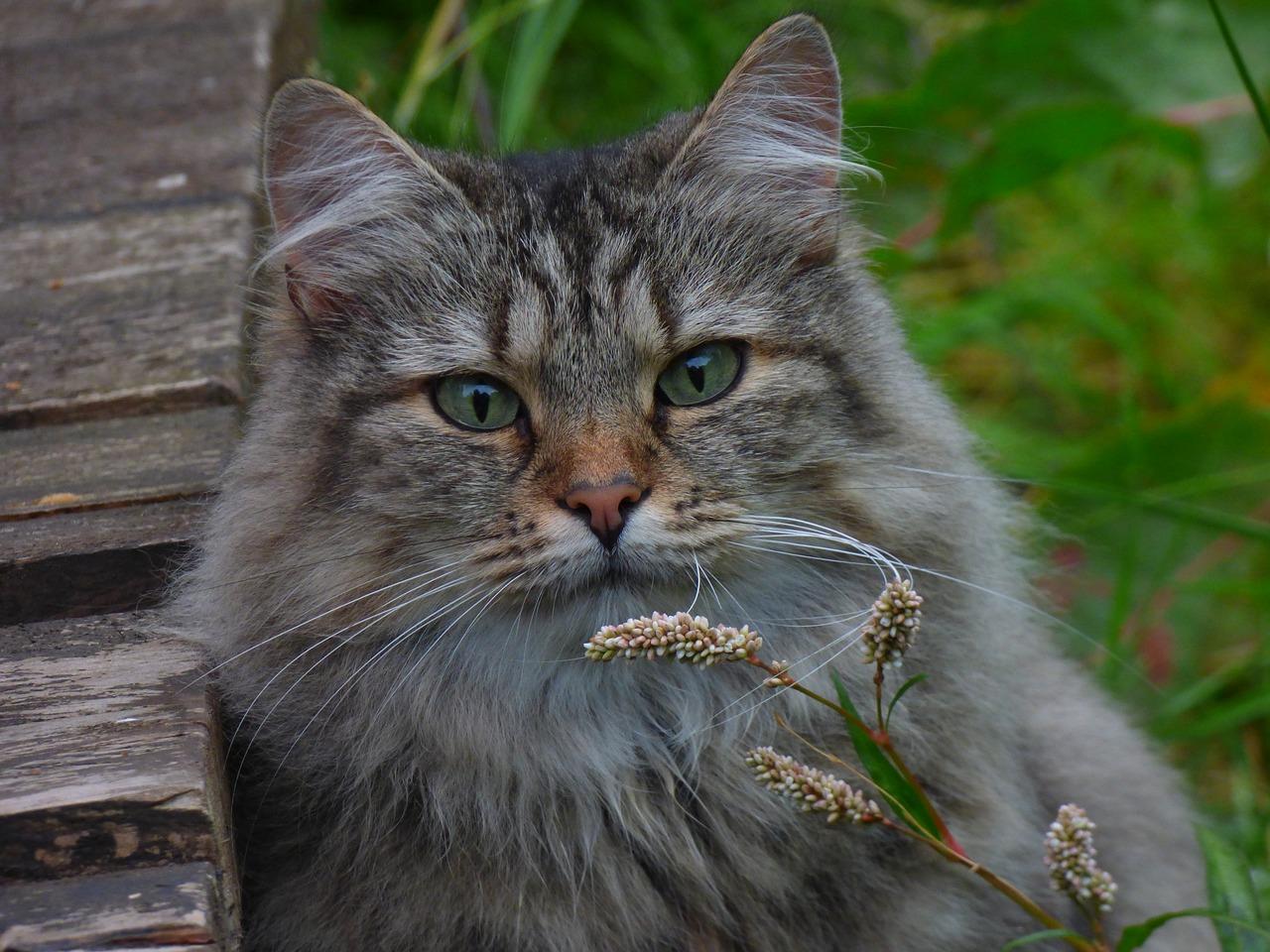 Majestatyczny kot